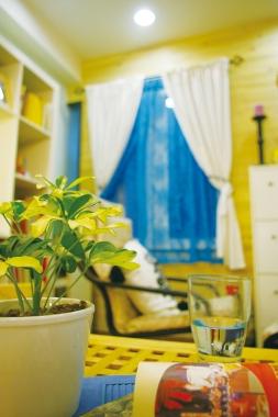 風水、招財、植物