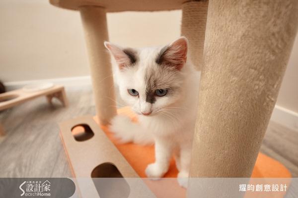 壁纸 动物 猫 猫咪 小猫 桌面 600_400